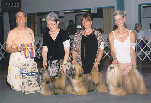 Lhasa Apso wint in Amerika